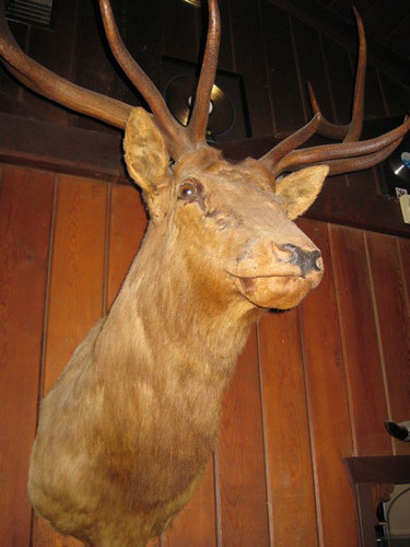 Rancho Nicasio Taxidermy Deer