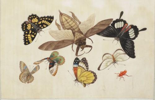 Butterfly Album f