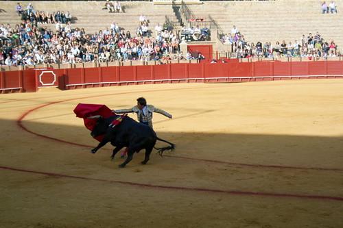Dianas- Spain 2010 378