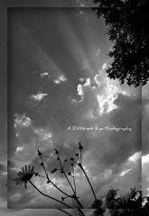 Shining His Light (A Different Eye Photography Twitter: ADiffEyePhoto) Tags: light summer blackandwhite bw sun digital nikon god rays beams sunbeams 2010 totalphoto flickraward nikond5000