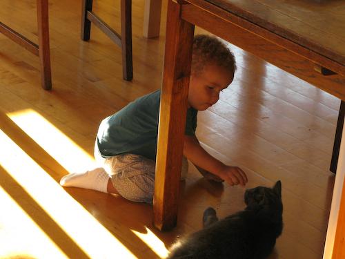 Feeding the cat 3