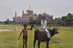 Portfolio_19 (BobbyArt.) Tags: travel boy india fun cow hilarious funny joke postcard tail photojournalism documentary tajmahal agra journalism sarcasm photojournalist