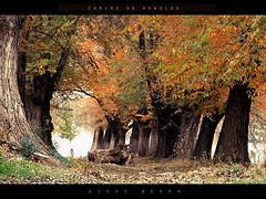 Camino de arboles (DiEgo bErrA) Tags: