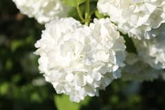 Blumen (Mac Oase) Tags: blumen margeriten