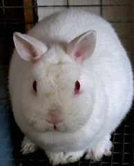 Cold Weather Care For Rabbits Extension