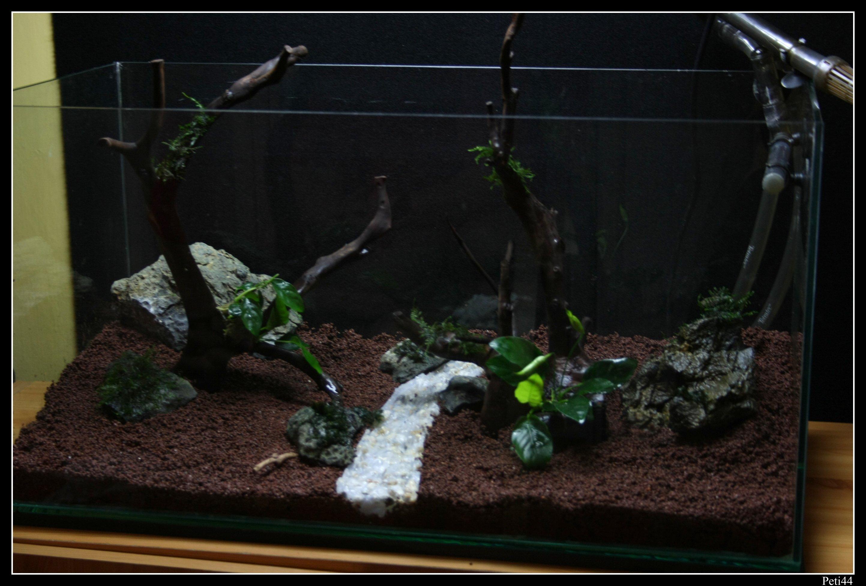 kövekkel és pár növénnyel