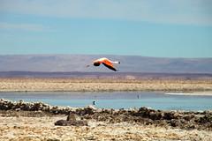 Laguna Chaxarr Atacama