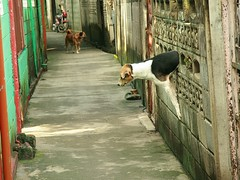 how the dog gets out of the yard (the foreign photographer - ) Tags: dog wall thailand hole path walk bangkok bricks scene squeezing tanon khlong bangkhen