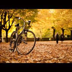 [Autunno] in Passeggiata, again (Un ragazzo chiamato Bi) Tags: autumn leaves bike yellow foglie pen 50mm dof bokeh f14 olympus giallo om leafs zuiko ep1 bicicletta terni sfocato 43adapter giardinipubblici lapasseggiata autunn