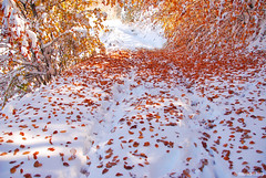 between the seasons (.:: Maya ::.) Tags: red mountain snow eye fall maya bulgaria rodopi  rhodope  mayaeyecom mayakarkalicheva  wwwmayaeyecom