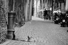 DSC_0303-bw (iulian nistea) Tags: street bw italy rome roma strada italia noiretblanc rue italie albnegru