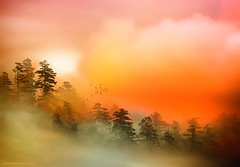 Dawn (HocusFocusClick) Tags: morning pink trees sky orange nature yellow clouds landscape dawn warm glow september