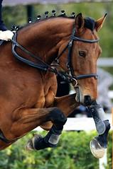 Horse Jumping (Stefano Mazzoni) Tags: sport nikon dynamic horsejumping ridinghorse stefanomazzoni equiconfor