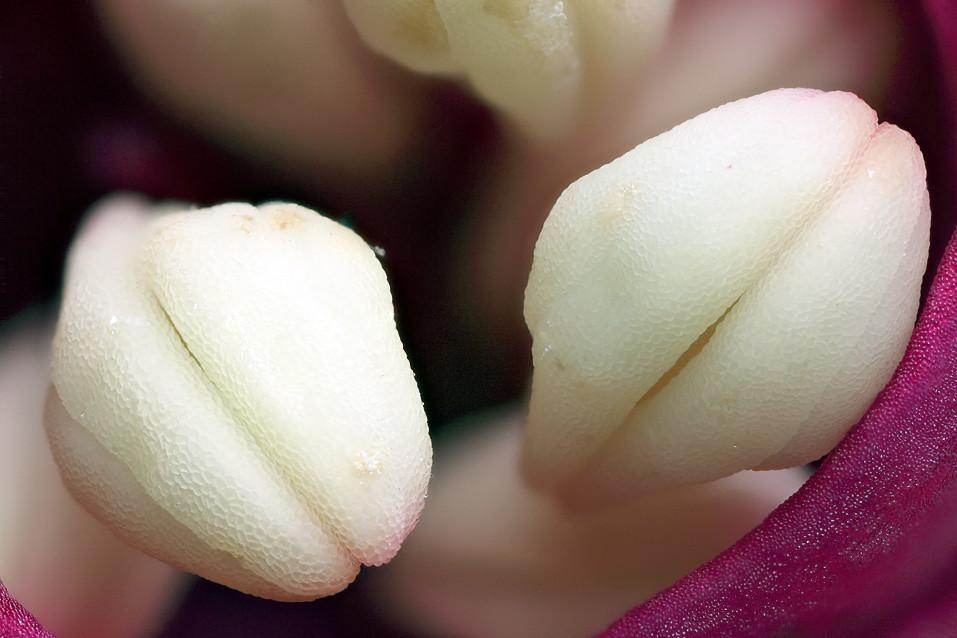 IMAGE: http://farm5.static.flickr.com/4065/5168975776_10de6d38f0_b.jpg