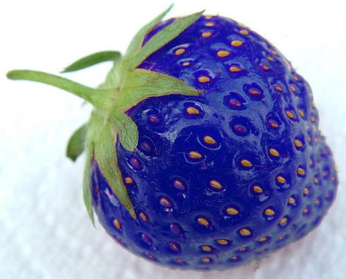 bluestrawberry5019488054_ce4e66291a
