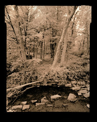 (Mark Magin) Tags: 4x5 alternativeprocesses kodakpolycontrastn lith shenhao woodlands