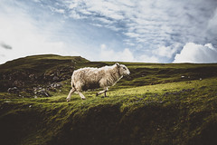 Highland sheep (Steffen Walther) Tags: reise schottland travel landscape europe sheep green scotland isleofskye skye highlands reisefotolust canon1740l canon5dmarkiii outdoors uk britain schaf animal wool
