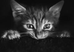 At the movies (10CatsPlus) Tags: cat kitten mammal pet cute portrait eye animal fur one baby whisker little domestic kitty greece thessaloniki pets horror dramatic home cinema naturallight window tv film movies movie eyes stare