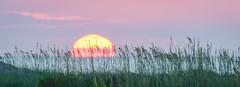 Sea Oat Sunrise (APGougePhotography) Tags: edisto edistobeach edistoisland sun sunrise dawn sea seascape oats nikon southcarolina south carolina coast beach nikond800 d800