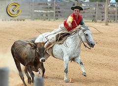 IMG_6154 (Edu Rickes) Tags: brazil horses brasil caballos rodeo cavalos rs riograndedosul gaúchos gaúchas beautifulshots piratini gineteada canon450d brazilianphotographers fotógrafosbrasileiros tirodelaço todososdireitosreservados fotógrafosgaúchos culturagaúcha edurickes belasimagens rodeiogaucho edurickesproduçõesfotográficas canonrebeldigitaleosxsi copyright©2010 fotografiaslegais