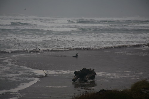 Sea Lion, Oregon