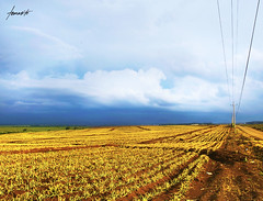 My Very Own Golden Field. (Tomasito.!) Tags: road blue sky brown green field lines del clouds landscape gold golden nikon power farm vibrant philippines scene tourist soil pineapple monte d90 cagayandeoro nothdr