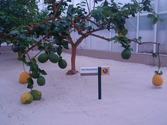 nine pound lemons
