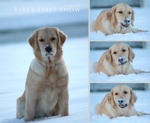 ViVi's First Snow