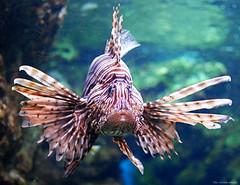 Fisk (Kurreburre) Tags: fish fisk