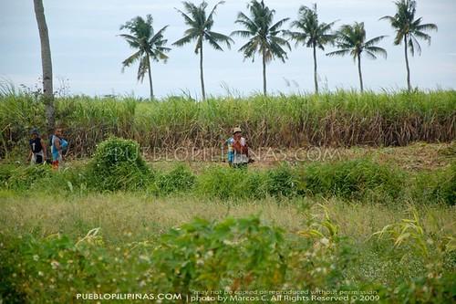 Sugarcane Workers