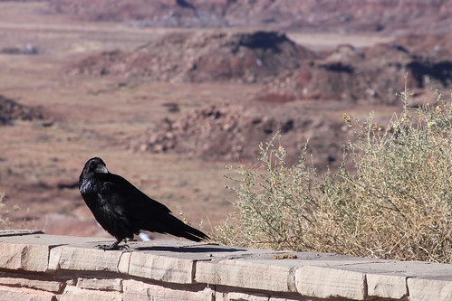 Painted Desert and Raven