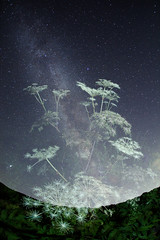 Galaxy Flowers(multiple viewpoints  (masahiro miyasaka) Tags: flowers sky white flower japan night canon stars outdoors iso3200 star fisheye galaxy astrophotography   technique oneshot milkyway cubism   startrail   earthandsky summertriangle  earthandspace sigma15mmf28exdgfisheye   Astrometrydotnet:status=failed eos5dmark bestnewcomer competition:astrophoto=2010 Astrometrydotnet:id=alpha20100143733192 stunningphotogpin