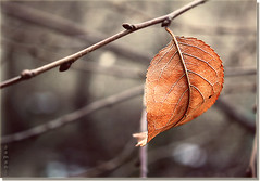 (seyed mostafa zamani) Tags: life camera new winter light cold color macro tree art love home colors beautiful look night canon eos stand leaf dance nice colorful asia iran branches arts iso 49 400 dreams iranian mm  2010  lovly        azarbayjan  eos450d  450d         natvryalyst