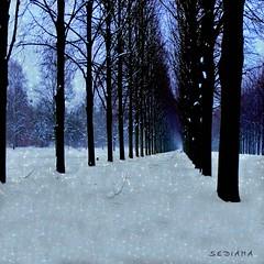 walking the dog (sediama (break)) Tags: blue snow germany hannover textures georgengarten rufusthomas sediama pareeerica igp7528567 ©bysediamaallrightsreserved