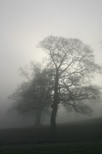 Foggy trees at Lowerhouse