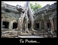 Ta Prohm - christine zenino