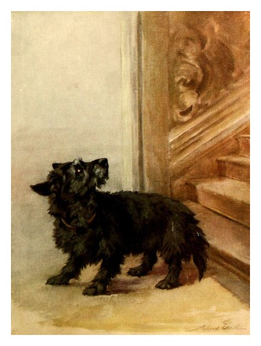 014-El Terrier escoces-The power of the dog 1910- Maud Earl