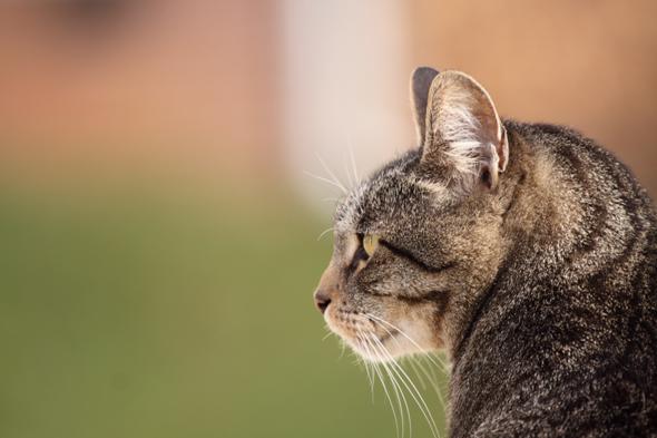 kitty_122109