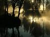 good morning! (ALVING) Tags: reflection heron fog dawn paisaje amanecer reflejo neblina xochimilco mex garza cuemanco alving impressedbyyourbeauty