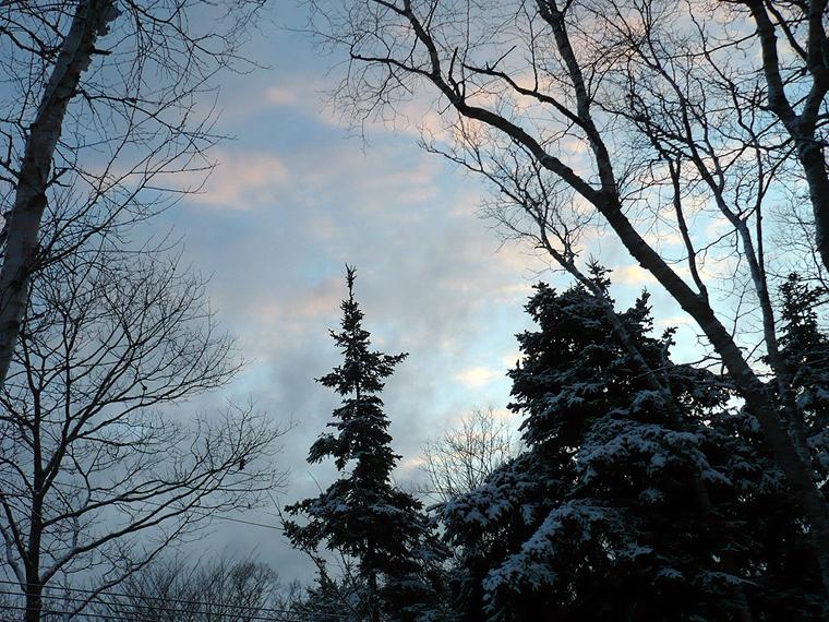 snow+tree2