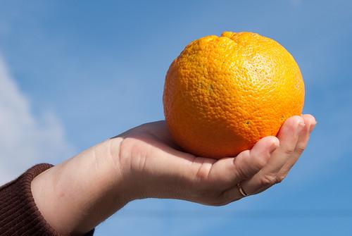 Day #24 - Orange