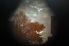 view from the inside.... (sarah arnett) Tags: clouds neglect palmtrees ghostly vignette baretrees refection wintersun saraharnettportfolio
