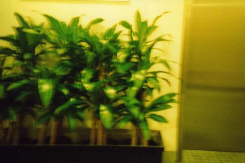 Green office plants