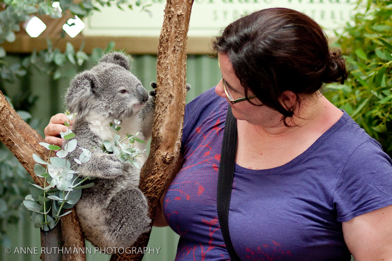Cuddling a Koala at Featherdale Wildlife Park
