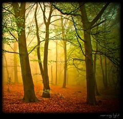 Nebelwald - morning light (NPPhotographie) Tags: wood morning mist tree art nature fog forest germany spring magic creative fairy dust oberberg fairyland mystic abigfave platinumphoto magicalmorning theunforgettablepictures artofimages saariysqualitypictures bestcapturesaoi bestofmywinners