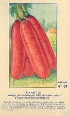 legume81 carotte