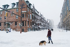 Snow almost over, at Charles and Mount Royal. (sidewalk flying) Tags: old city urban dog white snow storm girl quiet apocalypse charles baltimore shambles blizzard mountvernon brownstones apocalyptic mountroyal 2010 plowed rowhouses emptycity magan