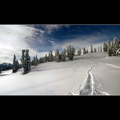 Lay Your Heartbeat Next to Mine (Christopher J. Morley) Tags: park mountain snow canada ski beauty snowshoe britishcolumbia tracks simple garibaldi provincial pristine coexist ajewelof