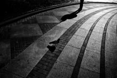 . (_alfabeta_) Tags: bw white black ombra bn uomo genova bianco nero piccione pavimento alfabeta