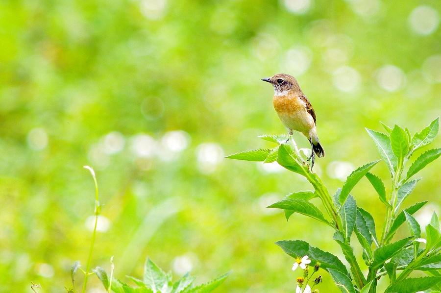 台大安坑農場賞鳥